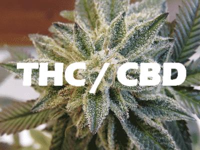 THC / CBD